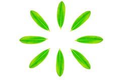 Folha verde com teste padrão do círculo Imagens de Stock Royalty Free