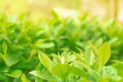 Folha verde com um dia ensolarado Foco macio fotos de stock