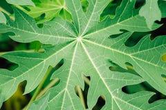 Folha verde como o fundo Imagens de Stock