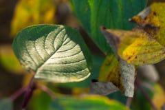 Folha verde da árvore na luz solar macia foto de stock