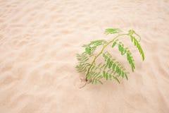 Folha verde da árvore na praia da areia Imagens de Stock Royalty Free
