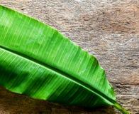 Folha verde da banana no fundo de madeira Fotos de Stock Royalty Free