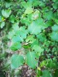 Folha verde da floresta imagem de stock