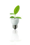 Folha verde da lâmpada Fotografia de Stock