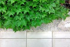 Folha verde da samambaia na textura do assoalho Imagens de Stock Royalty Free