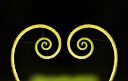 Folha verde dada forma coração Fotos de Stock