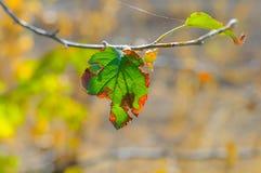 Folha verde danificada em um close-up da árvore Imagem de Stock