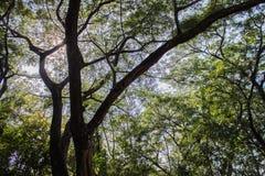 A folha verde das texturas fotografia de stock royalty free