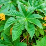 Folha verde de uma planta exótica do teste padrão da forma redonda Parte traseira da natureza Foto de Stock