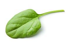 Folha verde do espinafre fotografia de stock royalty free