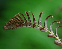 Folha verde do fern foto de stock