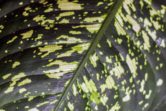 Folha verde do fundo da planta fotos de stock