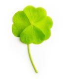 Folha verde do trevo de quatro folhas isolada Fotos de Stock Royalty Free