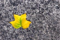 Folha verde dourada caída ao passeio do pavimento Fotos de Stock Royalty Free