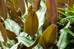Folha verde e branca do fundo da textura da planta imagens de stock