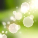 Folha verde fresca Foto de Stock