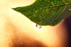 Folha verde fresca com fundo macro grande da gota e do bokeh fotos de stock royalty free