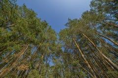 Folha verde fresca da árvore na floresta Imagem de Stock