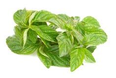 Folha verde fresca do melissa sobre o branco Fotografia de Stock Royalty Free