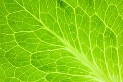 Folha verde fresca/macro super Imagem de Stock Royalty Free