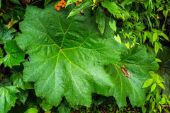 Folha verde luxúria em Manizales, Colômbia Imagens de Stock