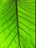 Folha verde - macro imagens de stock
