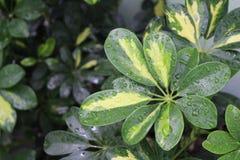 Folha verde molhada Fotos de Stock Royalty Free