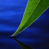 Folha verde na água fotografia de stock royalty free