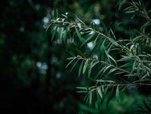 Folha verde na floresta foto de stock royalty free