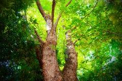 Folha verde na madeira Fotos de Stock
