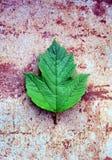 Folha verde na oxidação foto de stock