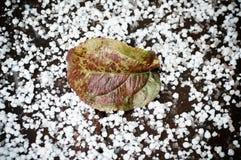Folha verde na primeira neve Fotografia de Stock