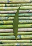 Folha verde no bambu imagens de stock royalty free
