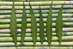 Folha verde no bambu foto de stock