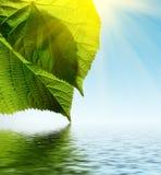 Folha verde no fundo do céu com água e o sol Foto de Stock Royalty Free