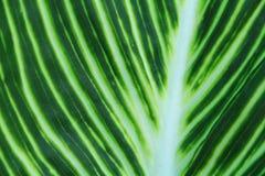 Folha verde no fundo do jardim Fotos de Stock