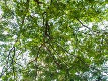 Folha verde no ramo de árvore Fotos de Stock