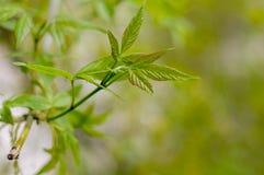 Folha verde no ramo Fundo verde imagem de stock