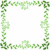 A folha verde-oliva ramifica quadro quadrado ilustração royalty free
