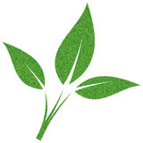 Folha verde pintada com seixos Imagem de Stock