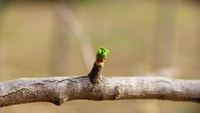 Folha verdejante Fotografia de Stock Royalty Free