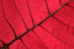 Folha vermelha Fotos de Stock Royalty Free