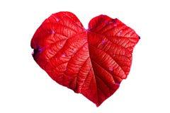 Folha vermelha na forma do coração Imagens de Stock