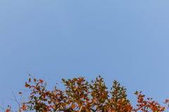 Folha vermelha no céu azul Fotografia de Stock Royalty Free