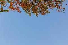 Folha vermelha no fundo do céu azul Fotografia de Stock Royalty Free