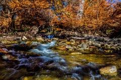 Folhagem de outono alaranjada impetuosa bonita nas águas rápidas de Guadalupe River, Texas fotos de stock royalty free