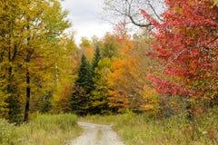 Folhagem de outono ao longo da estrada de terra estreita Imagem de Stock