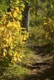 Folhagem de outono ao longo da fuga em Quincy Bog, Plymouth, New Hampshire imagens de stock royalty free