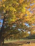 Folhagem de outono bonita na exploração agrícola foto de stock