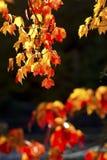 Folhagem de outono brilhante em Quincy Bog, New Hampshire imagens de stock royalty free